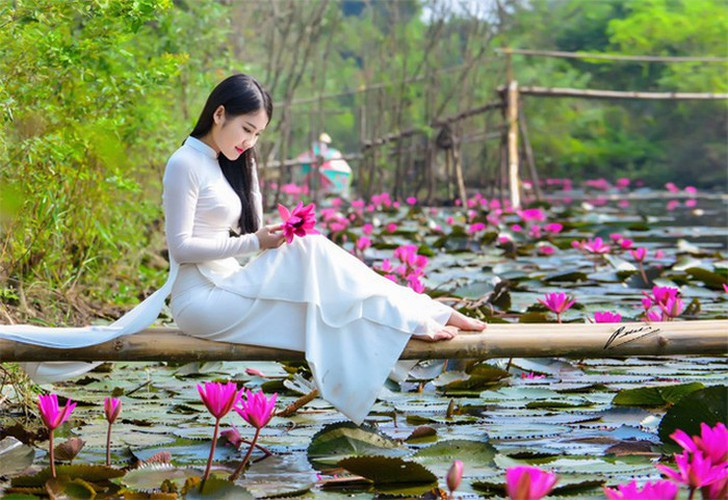 discovering stunning water lilies of yen stream hinh 9