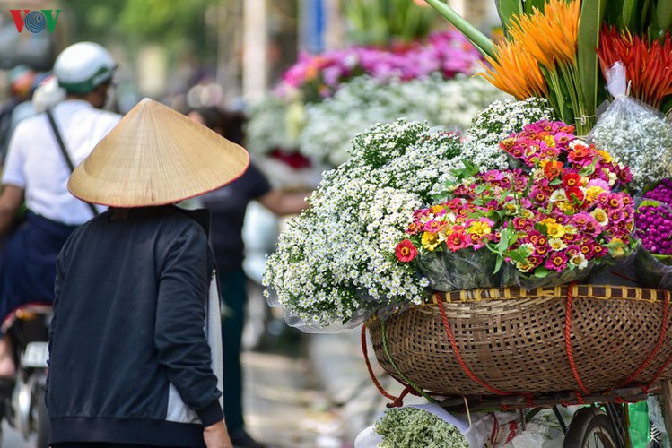 ox-eye daises flood the streets of hanoi hinh 2