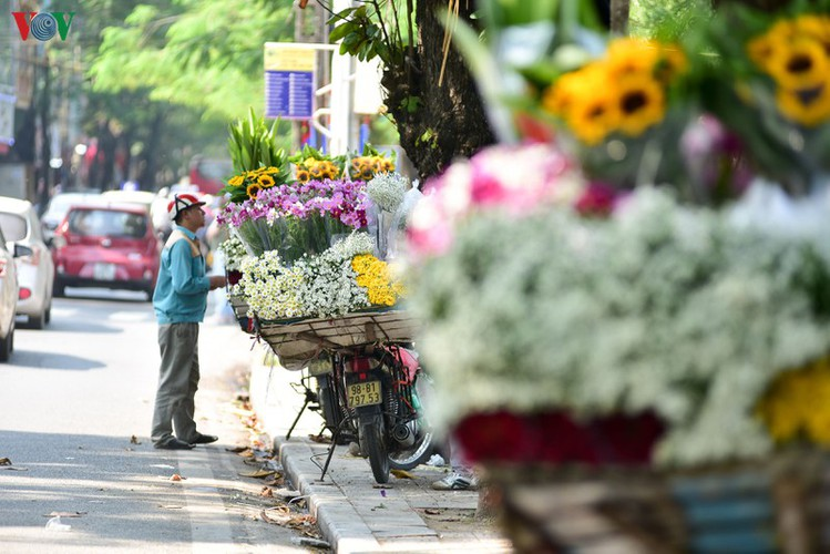 ox-eye daises flood the streets of hanoi hinh 5