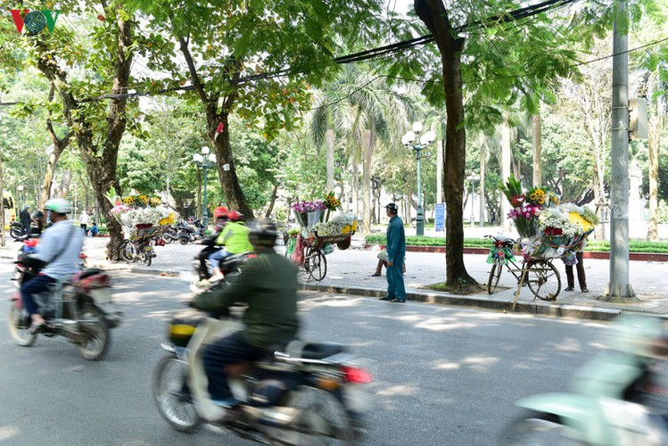 ox-eye daises flood the streets of hanoi hinh 8