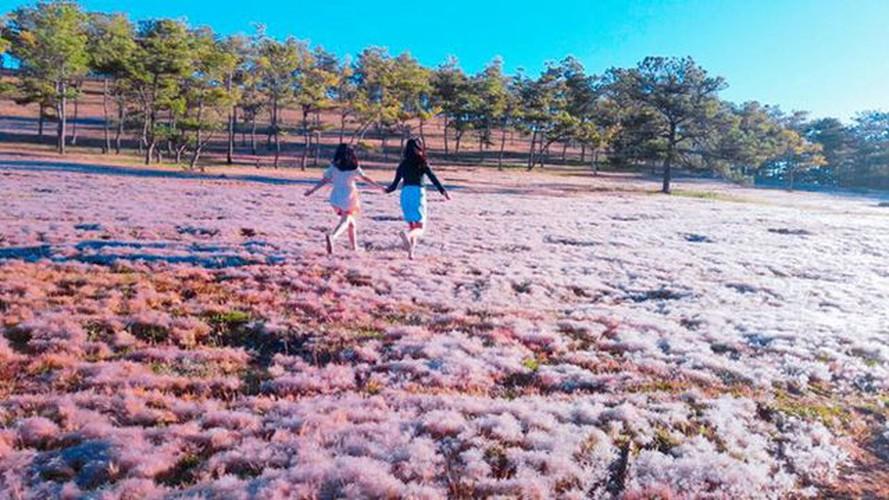 discovering stunning pink grass hills of da lat hinh 5