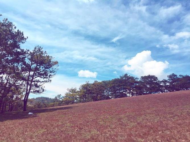 discovering stunning pink grass hills of da lat hinh 6