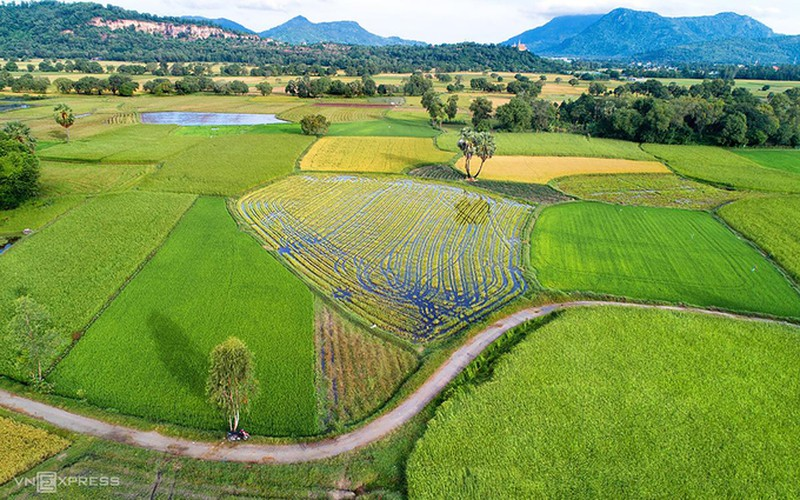exploring picturesque ta pa paddy fields from height hinh 5
