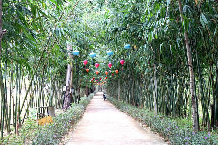 young people flock to unique bamboo forest in quang nam hinh 1