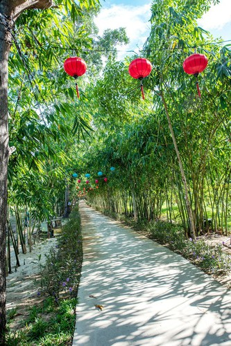 young people flock to unique bamboo forest in quang nam hinh 2