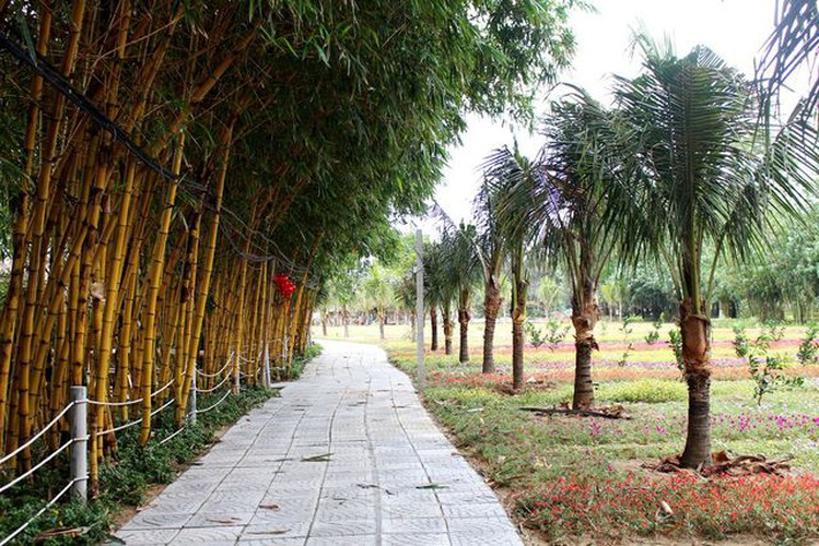 young people flock to unique bamboo forest in quang nam hinh 3