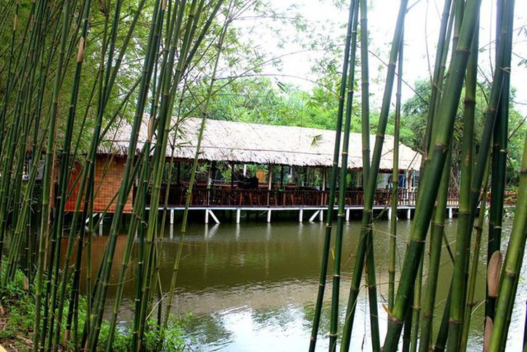 young people flock to unique bamboo forest in quang nam hinh 6
