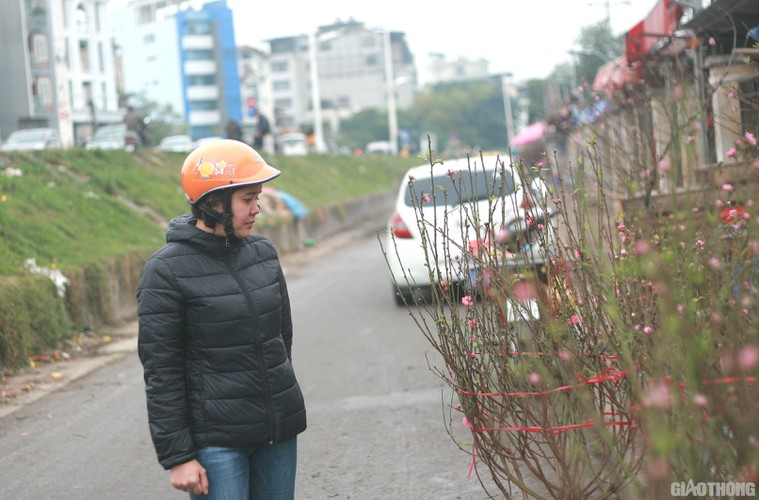 nhat tan peach blossoms signal first signs of tet in hanoi hinh 2
