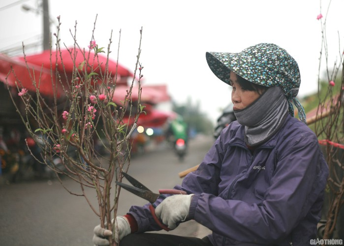 nhat tan peach blossoms signal first signs of tet in hanoi hinh 4