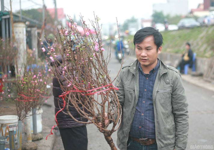 nhat tan peach blossoms signal first signs of tet in hanoi hinh 8