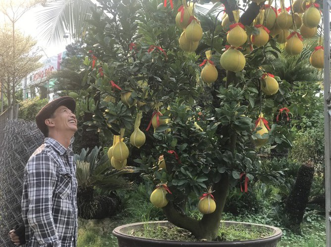 dien grapefruit in ho chi minh city sees price rise ahead of tet hinh 11