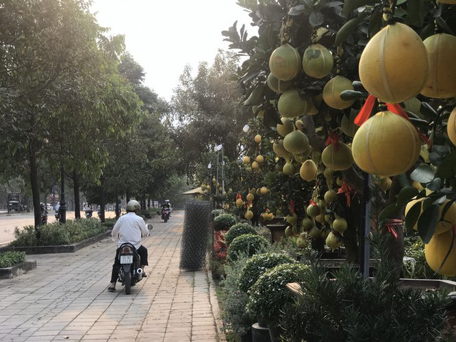 dien grapefruit in ho chi minh city sees price rise ahead of tet hinh 1