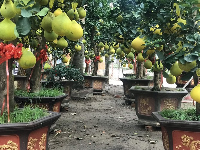dien grapefruit in ho chi minh city sees price rise ahead of tet hinh 2