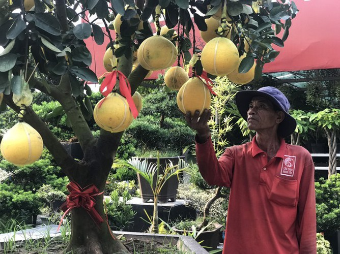 dien grapefruit in ho chi minh city sees price rise ahead of tet hinh 6