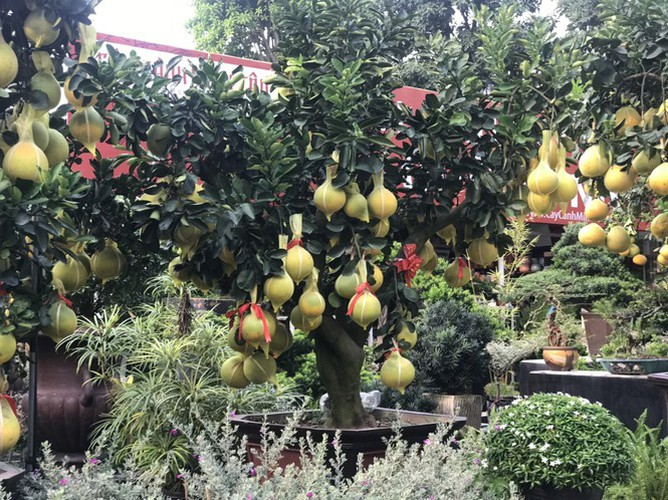 dien grapefruit in ho chi minh city sees price rise ahead of tet hinh 9