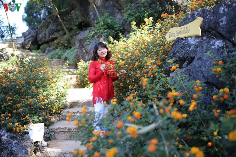 exploring pictureque moc mountain in moc chau hinh 1