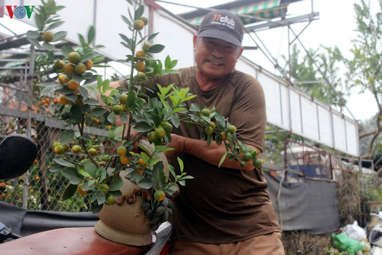 bonsai kumquat trees of tu lien village attracts customers hinh 12