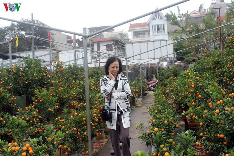 bonsai kumquat trees of tu lien village attracts customers hinh 13