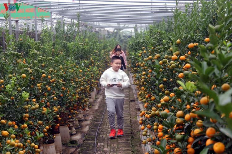 bonsai kumquat trees of tu lien village attracts customers hinh 14