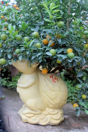 bonsai kumquat trees of tu lien village attracts customers hinh 7