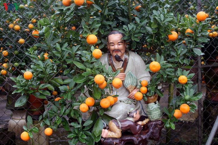 bonsai kumquat trees of tu lien village attracts customers hinh 8