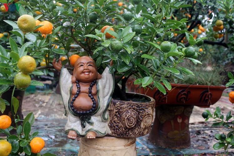 bonsai kumquat trees of tu lien village attracts customers hinh 9