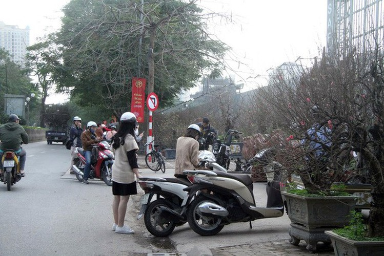 hanoi's streets flooded by wild peach blossoms as tet approaches hinh 2