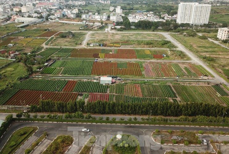 tet preparations underway for gardeners in hcm city's flower village hinh 13