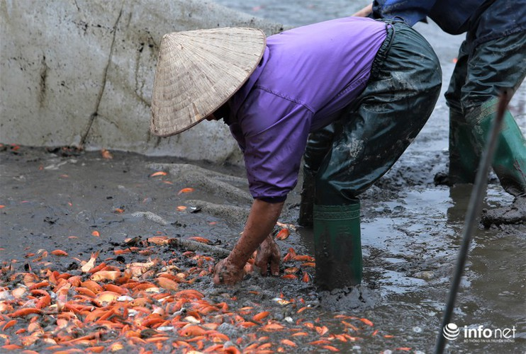 business booms in red carp farming village ahead of kitchen gods day hinh 3