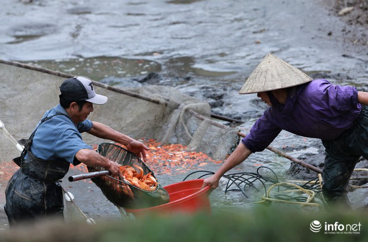 business booms in red carp farming village ahead of kitchen gods day hinh 6