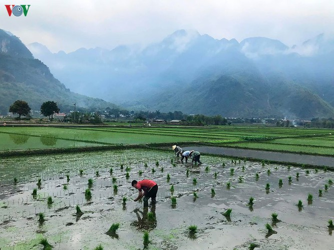 foreigners savour tranquil scenery of villages in mai chau hinh 4