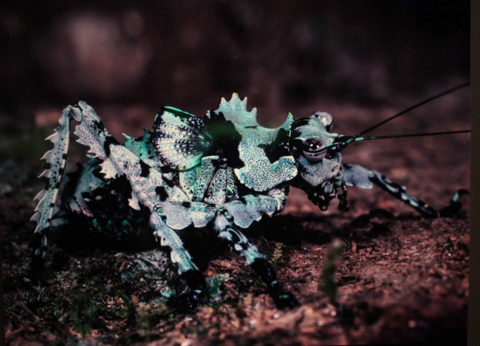 amazing vietnamese insects through the lens of italian photographer hinh 18