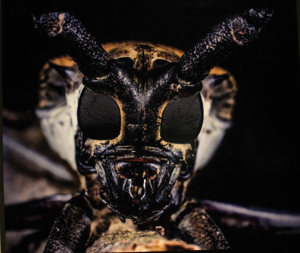 amazing vietnamese insects through the lens of italian photographer hinh 20