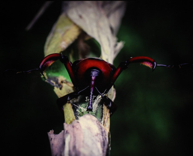 amazing vietnamese insects through the lens of italian photographer hinh 21
