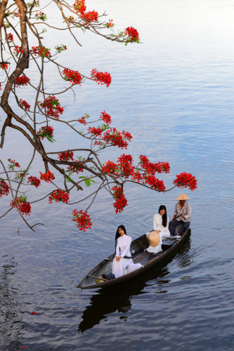 flamboyant flowers leave streets of hue awash with red hinh 5