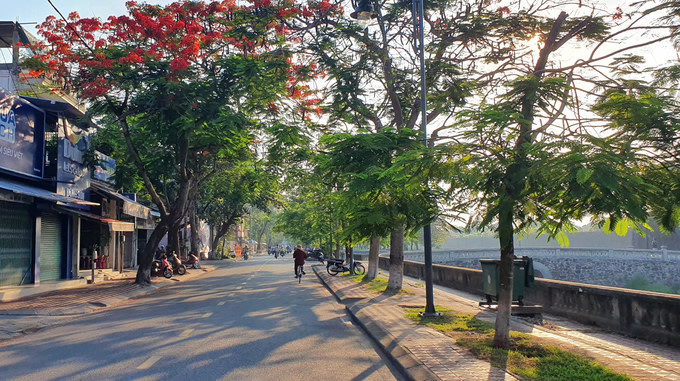 flamboyant flowers leave streets of hue awash with red hinh 8