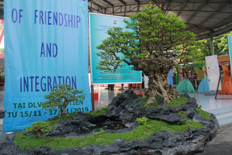thousands of bonsai go on show at asia-pacific exhibition hinh 19
