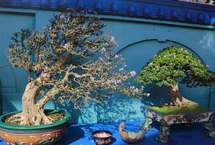 thousands of bonsai go on show at asia-pacific exhibition hinh 1