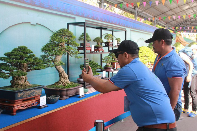 thousands of bonsai go on show at asia-pacific exhibition hinh 2