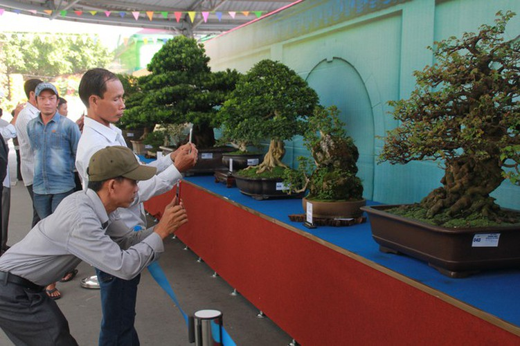 thousands of bonsai go on show at asia-pacific exhibition hinh 3
