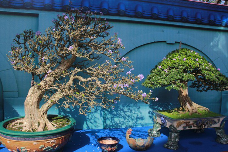 thousands of bonsai go on show at asia-pacific exhibition hinh 8