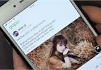Vietnamese social networks thrive amid Facebook dominance