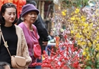 First signs of spring beauty spotted on Hanoi streets