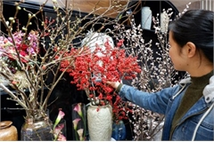 Expensive imported flowers a hot item for Tet