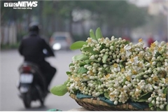 People across Hanoi enjoy fresh scent of grapefruit flowers