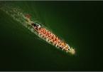 Vietnamese photographer claims best photo of #Sport2020