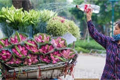 Streets around Hanoi enjoy sight of blossoming lotus flowers