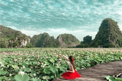 Beautiful lotus ponds in Ninh Binh become hot summer check-in spot