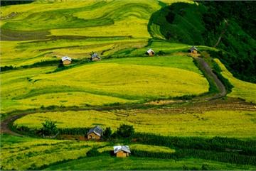 Top spots to enjoy ripening rice fields in north-western region