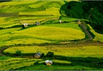 Top spots to enjoy ripening rice fields in Vietnam's north-western region